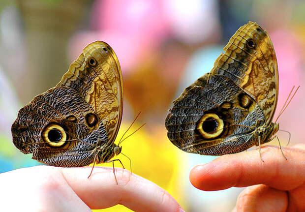 Две очаровательные зверушки лучше, чем одна. Близнецы