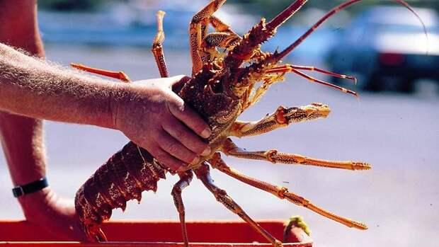 http://resources3.news.com.au/images/2010/03/08/1225838/097071-lobster.jpg