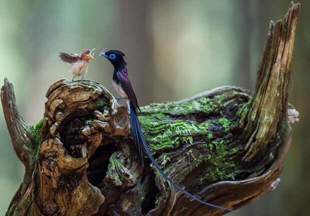 1.  красота, природа, птицы, фото