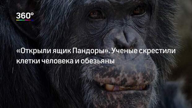 «Открыли ящик Пандоры». Ученые скрестили клетки человека и обезьяны