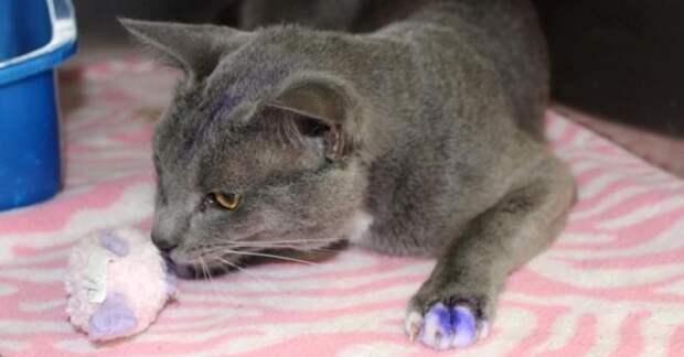 Фиолетовый – значит, «наживка»: как славный котик чуть не стал жертвой жестоких людей