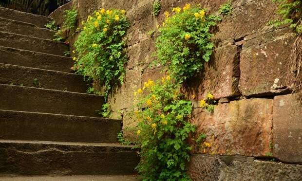 Лестницы в Симферополе решили пересчитать