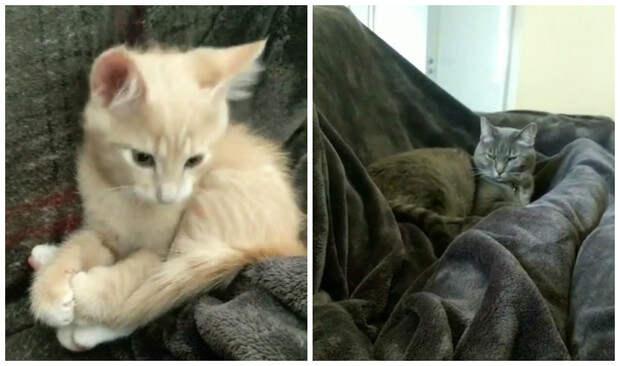 Реакция кота на котенка, которого хозяин только что принес домой
