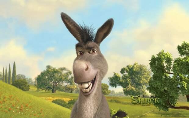 Осёл: Животное с «двойным дном». Почему лошади не способны их заменить? Какие у ослов есть особые способности?
