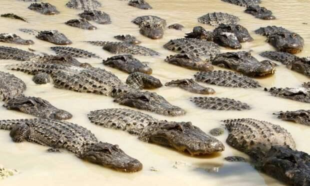 Котоматрица: В бочке меда ложка дегтя, В молочной реке толпа крокодилов.