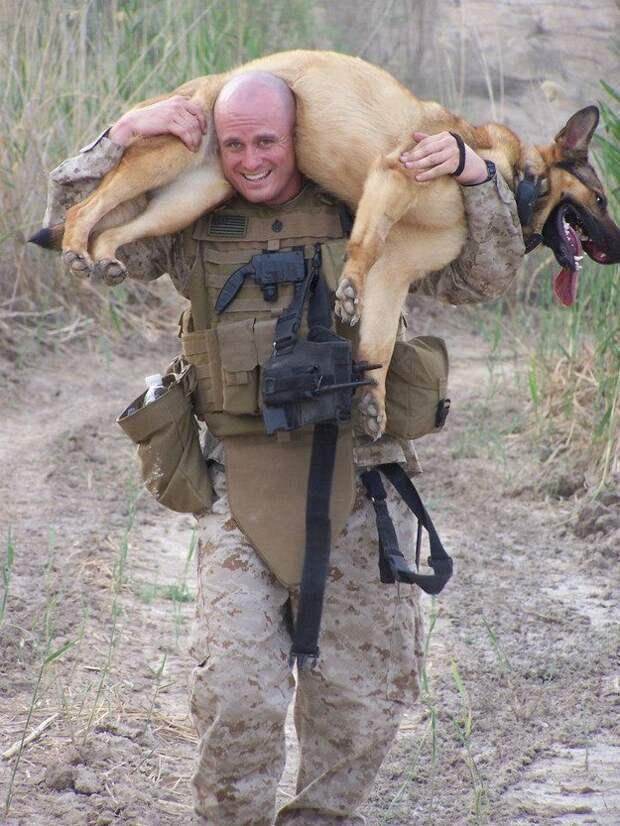 За что мы так любим собак
