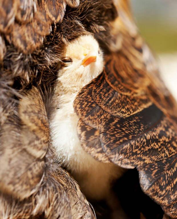 21.  красота, природа, птицы, фото
