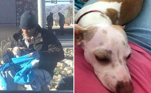 Бездомный мужчина спас собачку от гибели