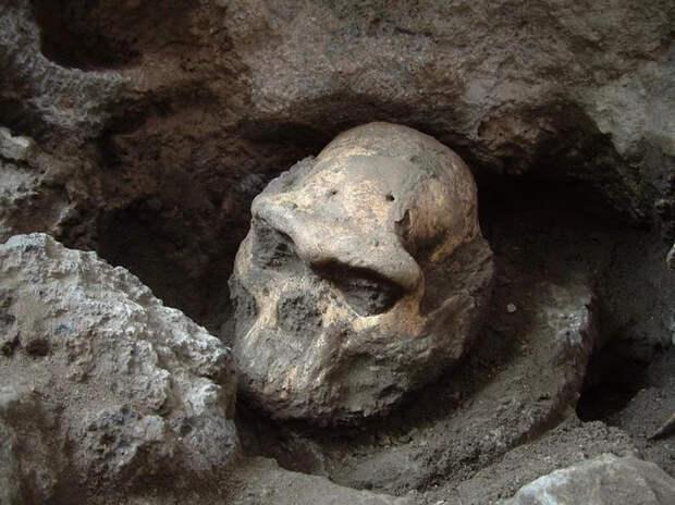 Интересные ископаемые Интересное, Познавательно, Палеонтология, Ископаемые, Окаменелости, Животные, Вымершие виды, Домашние животные, Длиннопост