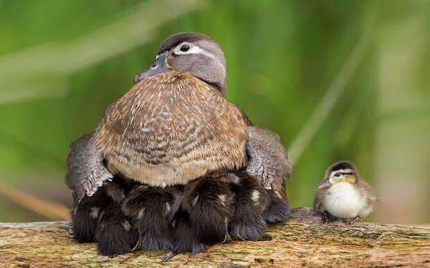 19.  красота, природа, птицы, фото