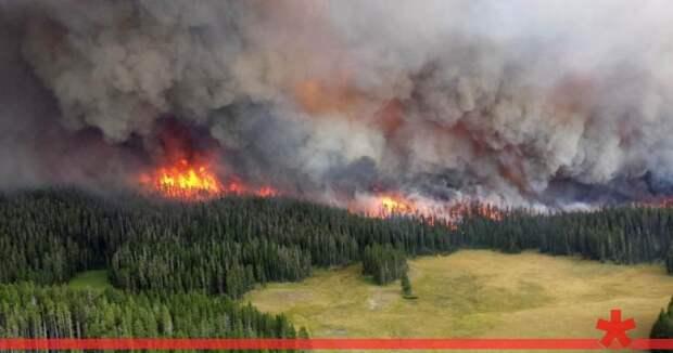 Красноярский губернатор заявил, что тушить лесные пожары вредно и бессмысленно