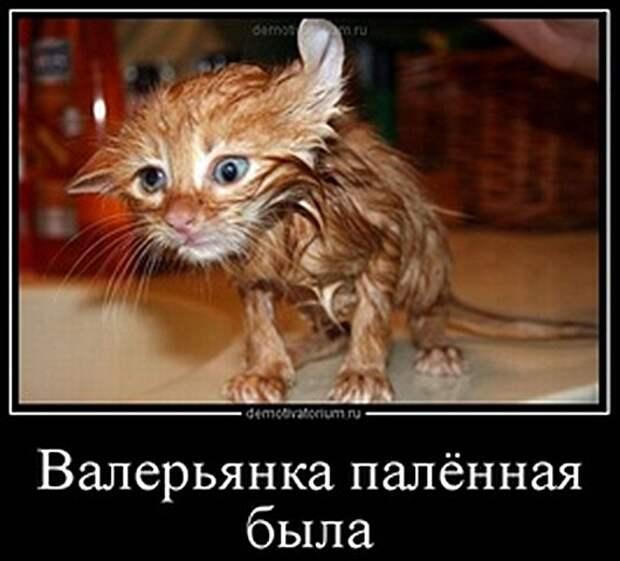 tmb_2609120947211951