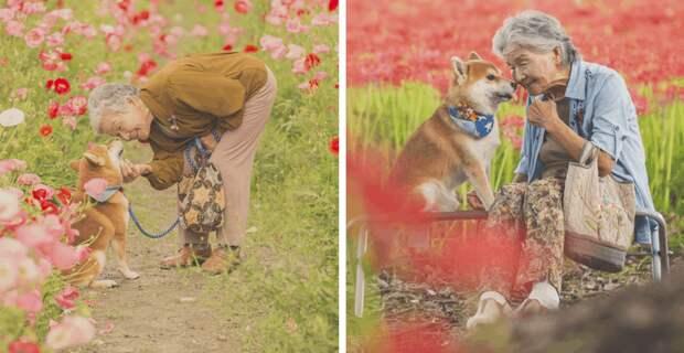 Фотограф из Японии делает трогательные снимки своей бабушки и собаки