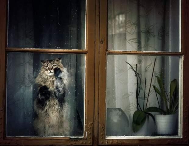 7238660-R3L8T8D-650-cat-waiting-window-7