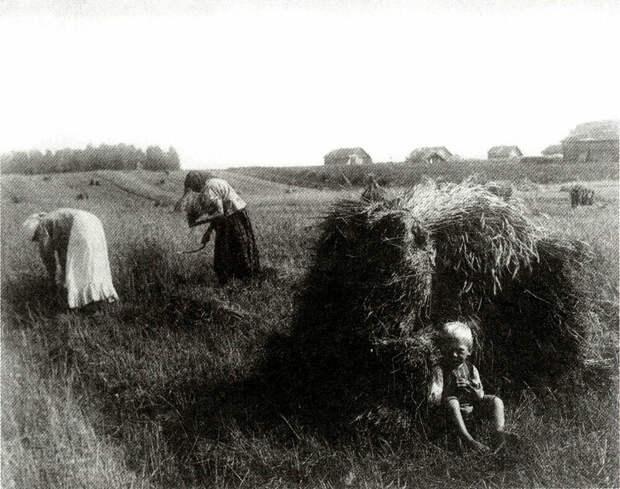 Жатва в поле. Владимирская губерния. 1910-е годы | Фото: Сергей Лобовиков