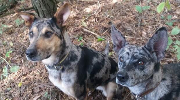 Милая собака в пятнышках покорила девушку и она забрала ее домой, а вскоре встретила вторую, такую же