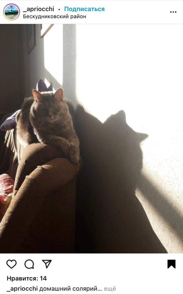 Фото: кот и его тень в Бескудникове