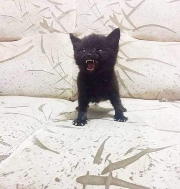 15 очень маленьких и очень злых котят