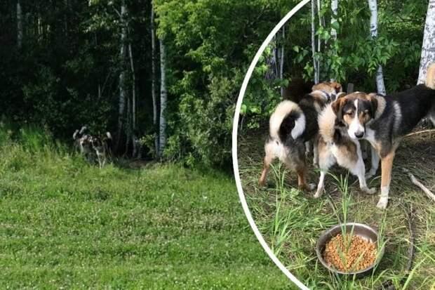 «Агрессируют»: волонтеры рассказали, где сейчас собаки пропавшего дяди Толи