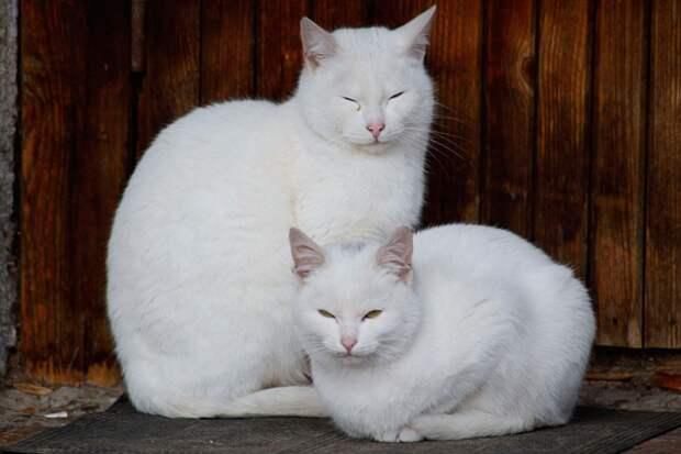 """Если котик спит исключительно """"на коленках"""", поджав лапы под тело - стоит показать его ветеринару Фото: Дмитрий АХМАДУЛЛИН"""