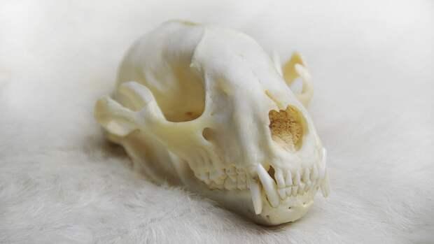 Австралийские археологи обнаружили череп неизвестной рептилии
