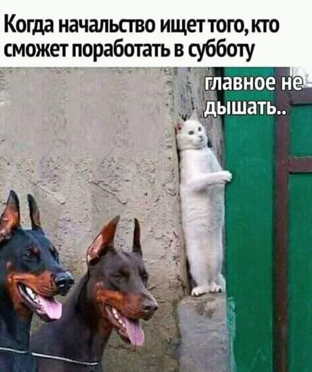 Иван Сидоров поступил в институт за взятку. На его месте так поступил бы каждый!