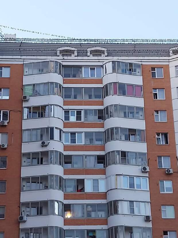Фото дня: голуби захватили крышу жилого дома на Дмитровском