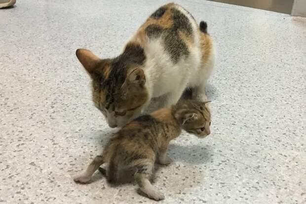 В Турции кошка принесла на осмотр котенка в отделение скорой помощи