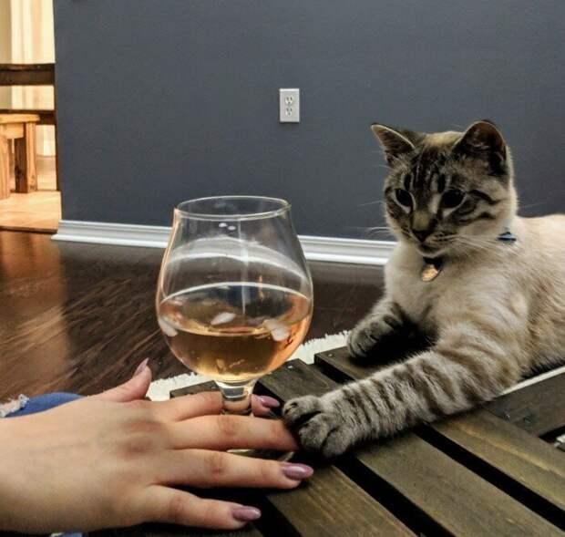 Фотографии быстро стали вирусными на Reddit и Facebook домашние животные, коты, кровать, мебель для кошек, мебель из дерева, миниатюрная, самоделки, своими руками