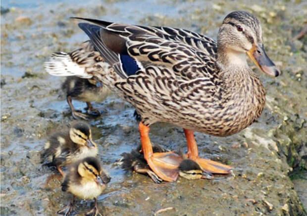 Не вам судить о поведении многодетной матери! | Фото: Taringa!