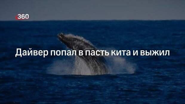 Дайвер попал в пасть кита и выжил