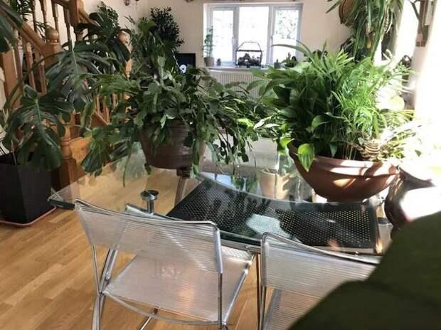Джунгли зовут: как живется в квартире полной комнатных растений