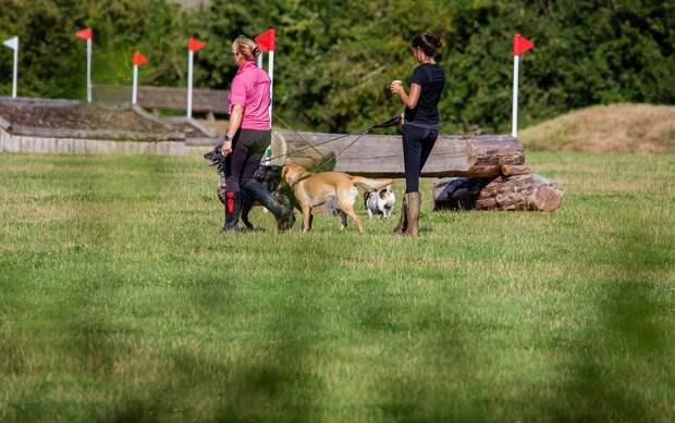 Площадку для выгула собак могут обустроить в Глазове