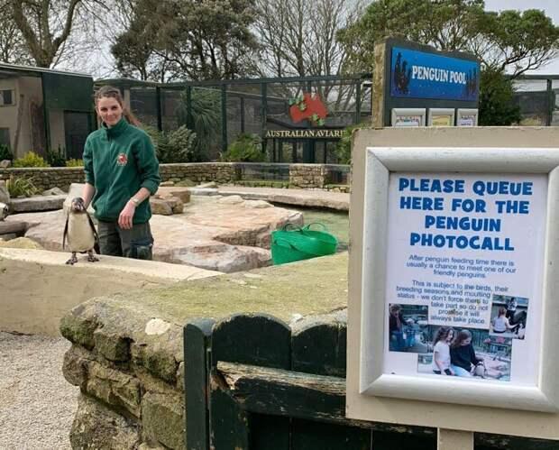Четыре сотрудницы зоопарка в Англии пережидают карантин с животными
