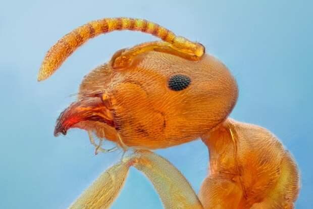 insects44 Портреты насекомых