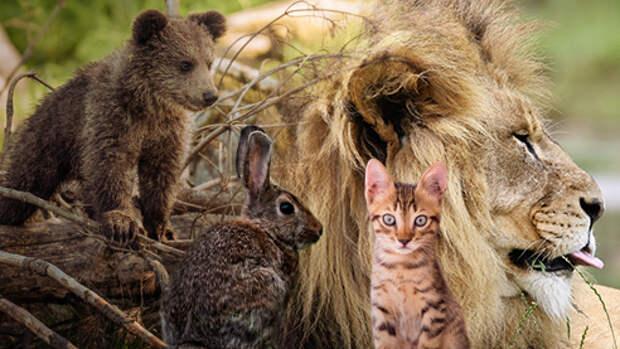 Дикие животные: уроки выживания