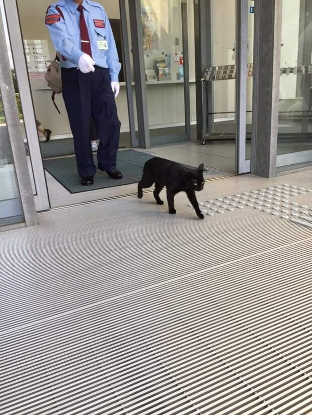 Тогда чёрному котику не дали прикоснуться к прекрасному и развернули ещё на входе животные, кот, кошки, милота, музей, япония