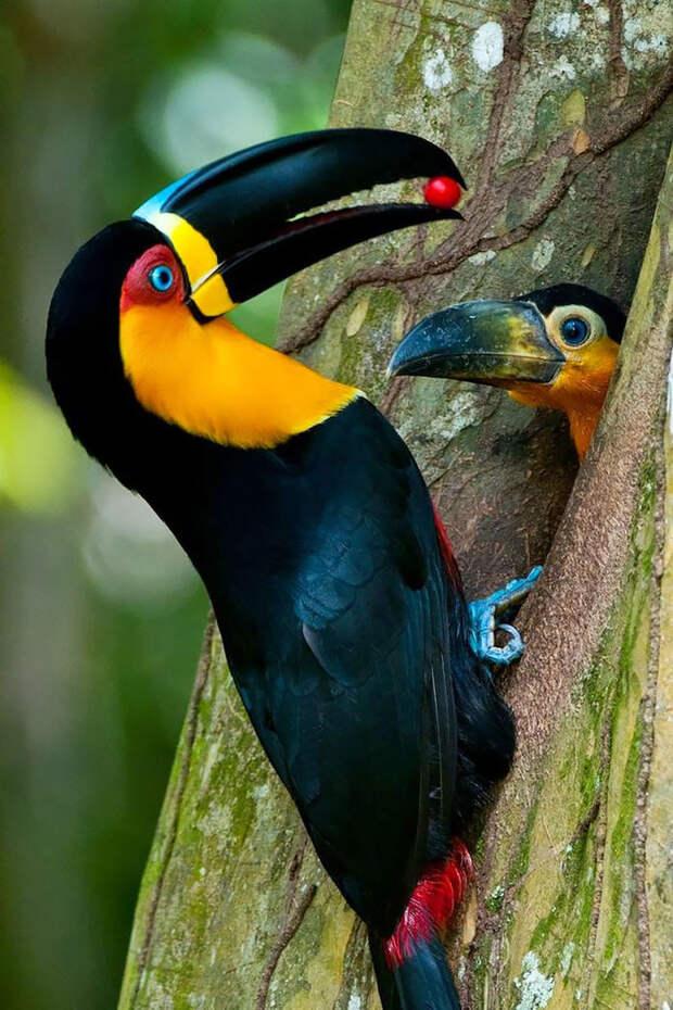 11.  красота, природа, птицы, фото