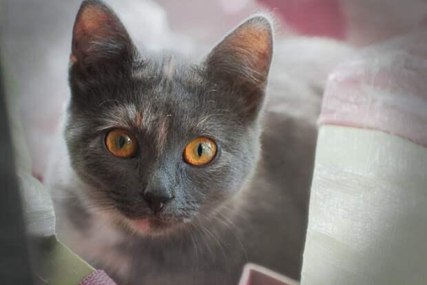 Как видят кошки: 4 особенности кошачьего зрения