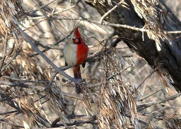 Эта редкая птица из-за выходки природы обречена на одиночество