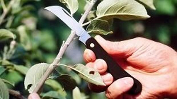 Прививочный нож
