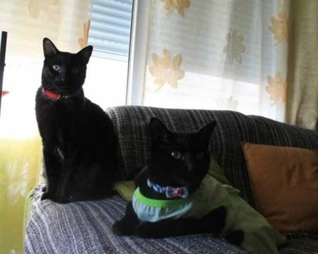 Была одна кошка, стало две (источник фото thedodo.com)