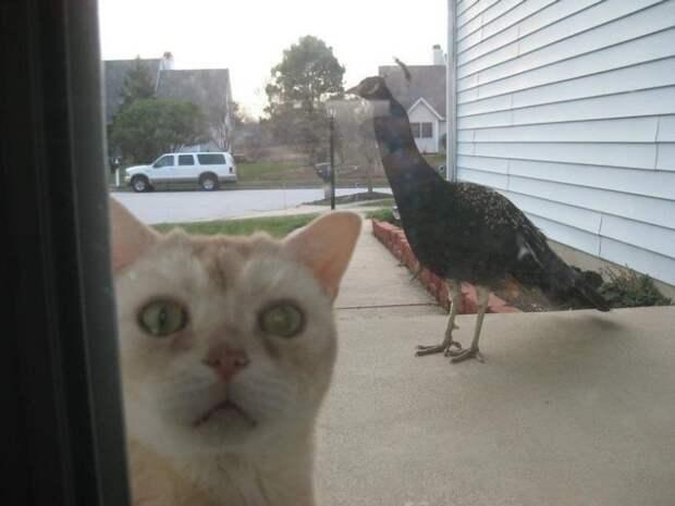 Животные, которым срочно нужно попасть внутрь