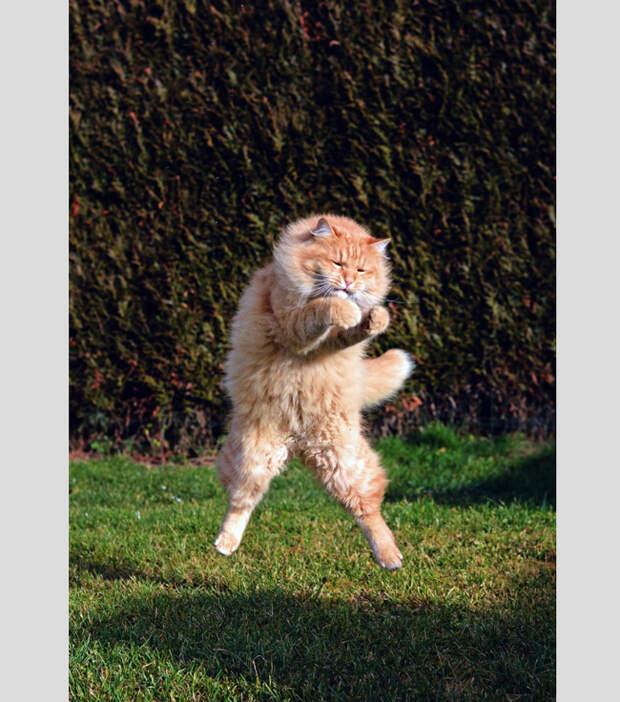 20 веселых фотографий с кошками