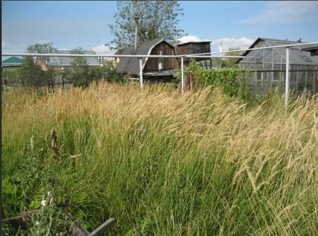 Юрист оценил перспективы законодательной инициативы Минэкономразвития об изъятии у граждан земельных участков за нескошенную траву