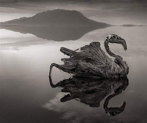 5. Озеро Натрон в Танзании закристаллизовывает птиц и животных до смерти