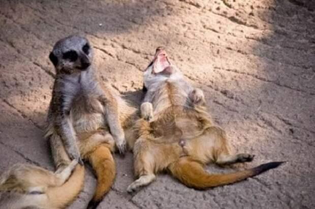 Позитивные эмоции животных