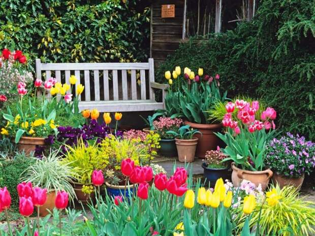 Тюльпаны в саду ландшафтный дизайн