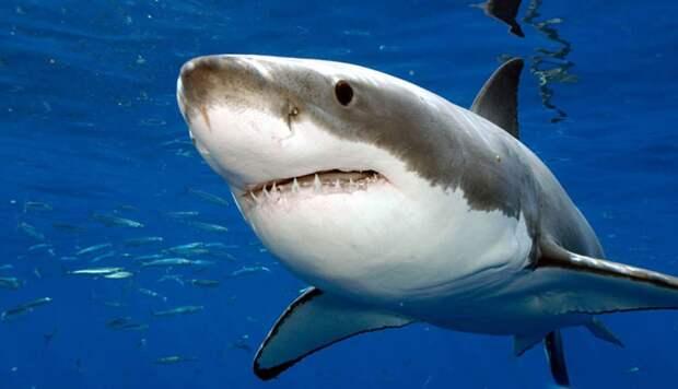 Акулы используют магнитное поле Земли в качестве GPS-системы