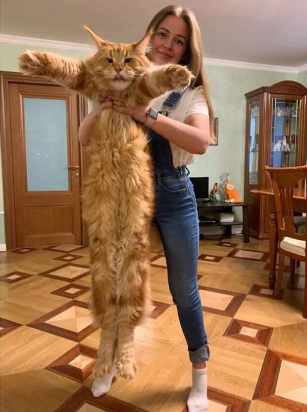 Кошки могут и не такое